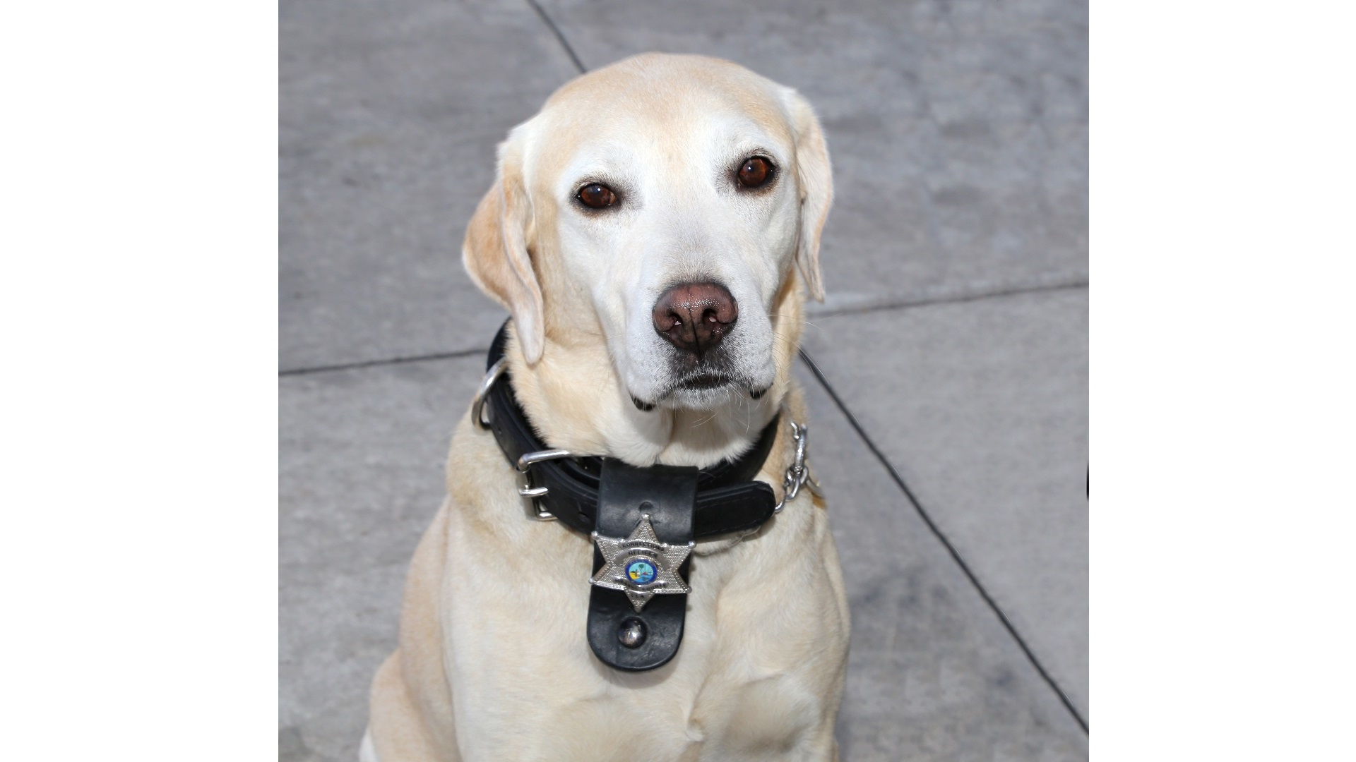 Image of K9 Tony
